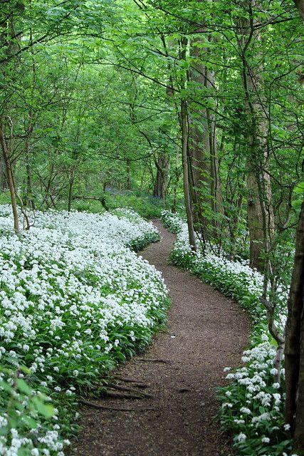 Le bain de Forêt : comment profiter de ses bénéfices ?